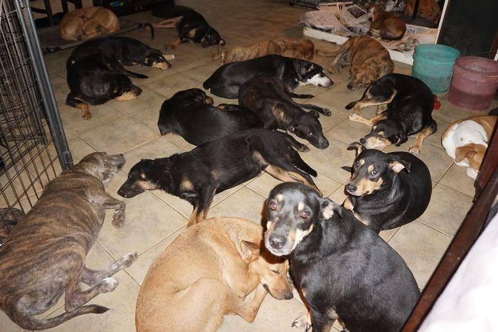 mulher abriga 97 cães dorian 5