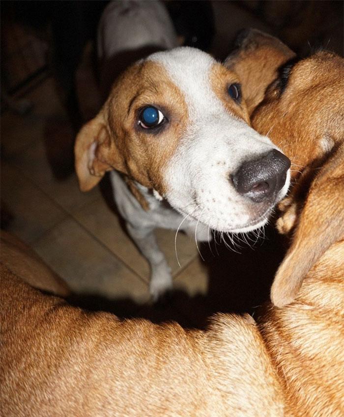 mulher abriga 97 cães dorian 7