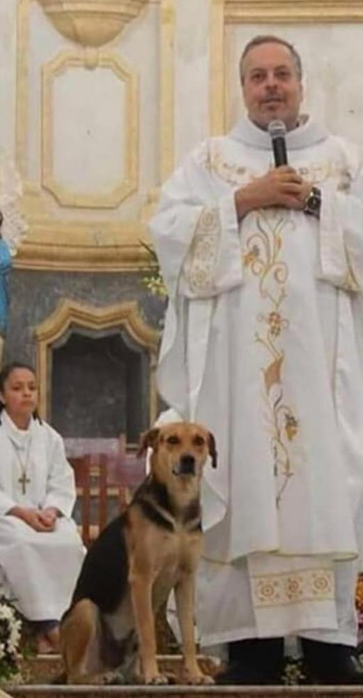 padre cães adotar missa 2