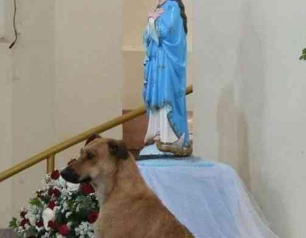 padre cães adotar missa 4