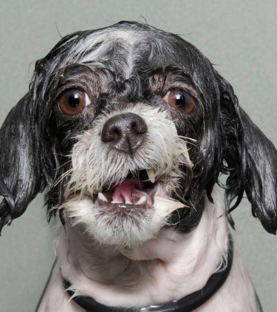 Um maravilhoso ensaio de cães molhados saindo do banho para alegrar seu dia
