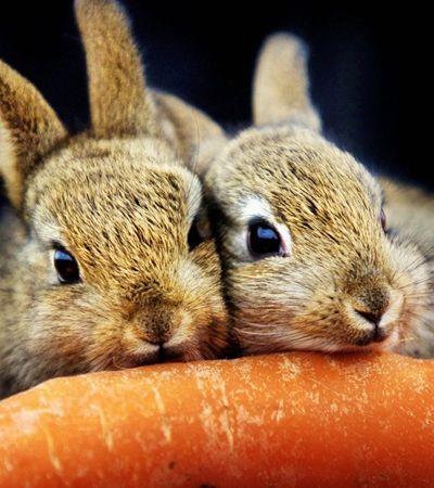 Como os coelhos podem ajudar a desvendar a origem do orgasmo feminino