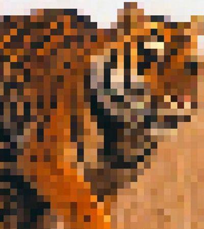 Essas fotos tem o mesmo número de pixels que sobreviventes destas espécies em extinção