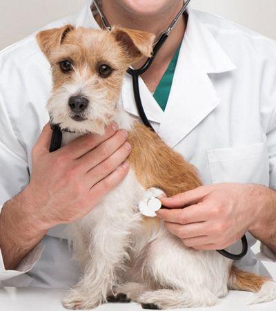 Relato de veterinário sobre a dor e a responsabilidade de praticar eutanásia canina é de partir o coração