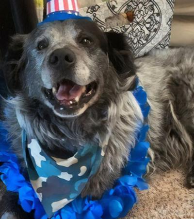 Cachorro doente e abandonado volta a sorrir depois de ser adotado