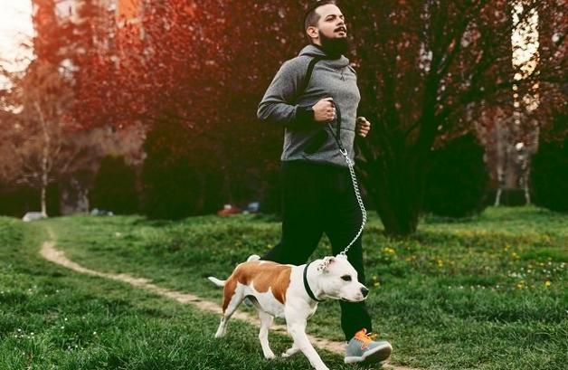 cachorro faz bem pra saúde 1