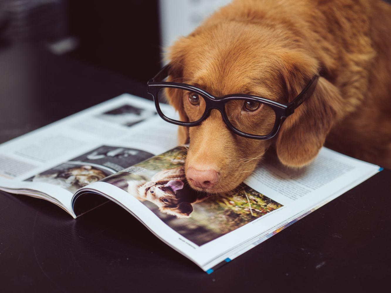 cachorro faz bem pra saúde 2