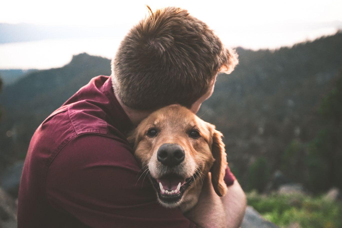 cachorro faz bem pra saúde 3