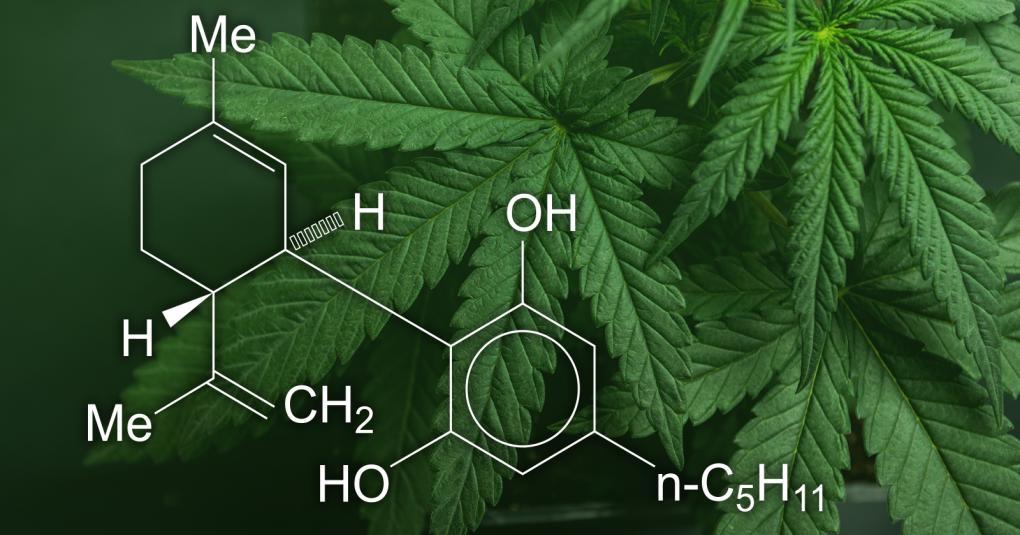 cannabis tratamento câncer 1