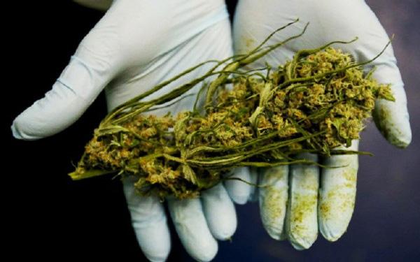cannabis tratamento câncer 2