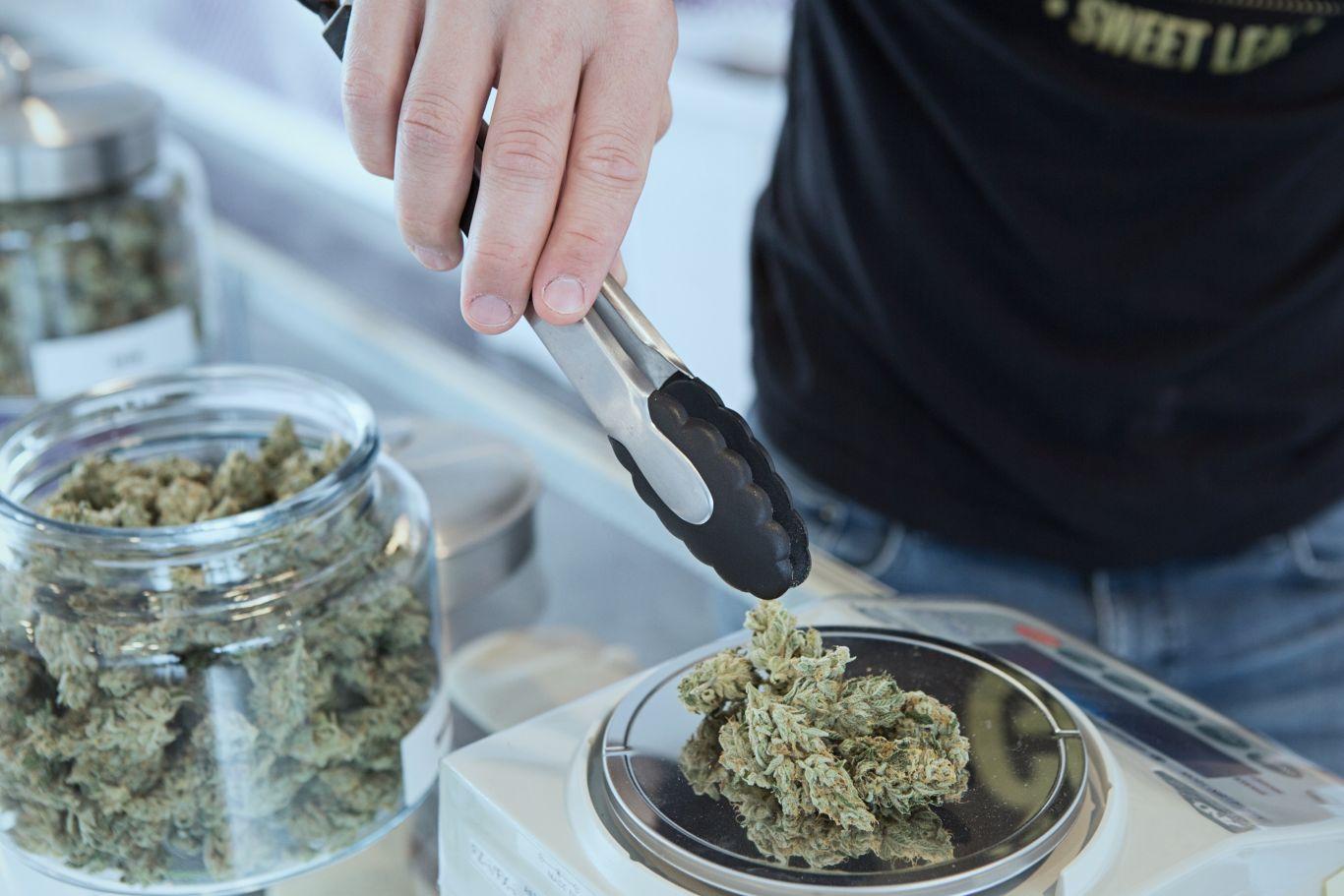 cannabis tratamento câncer 3