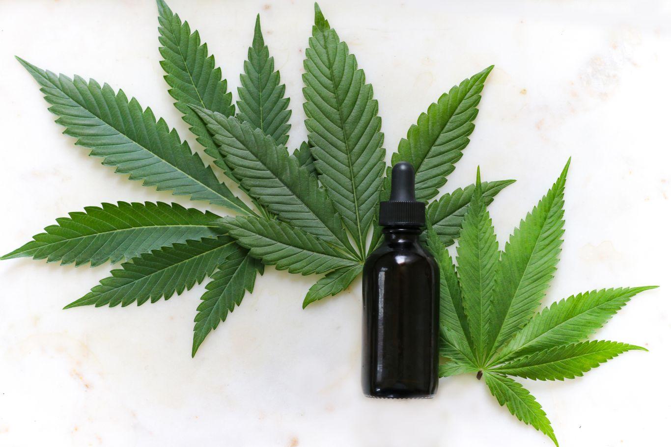 cannabis tratamento câncer 4