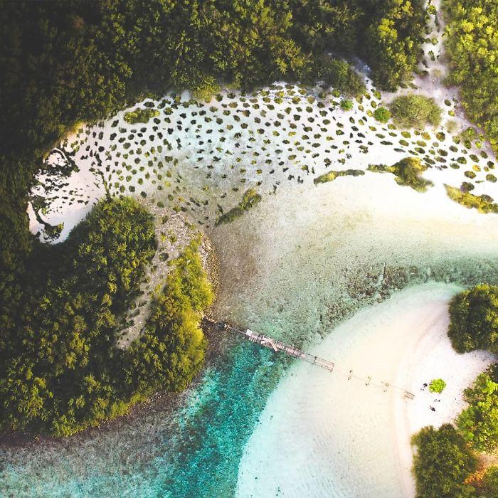cenas surreais animais e natureza 4