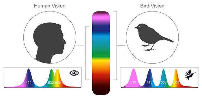 como os pássaros enxergam 2