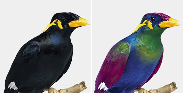 como os pássaros enxergam 3