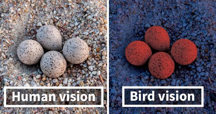 como os pássaros enxergam 5
