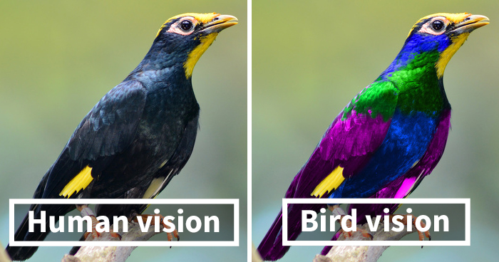 como os pássaros enxergam 6