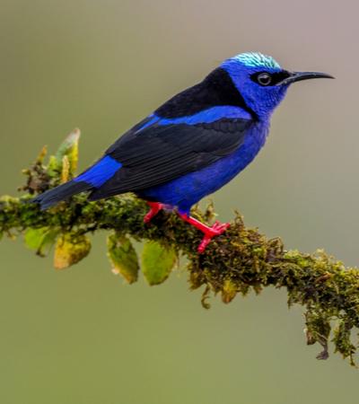 Imagens mostram como pássaros enxergam o mundo em comparação com humanos