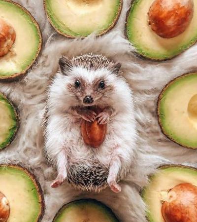 Herbee: o porco-espinho mais famoso da internet que já tem mais de 1,5 milhão de seguidores