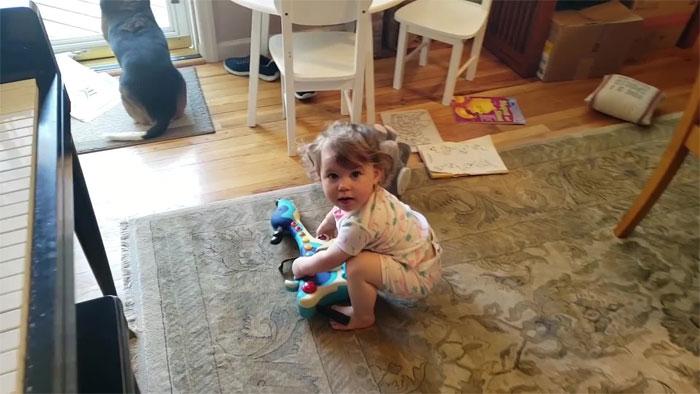 vídeo cachorro pianista e bebê 1