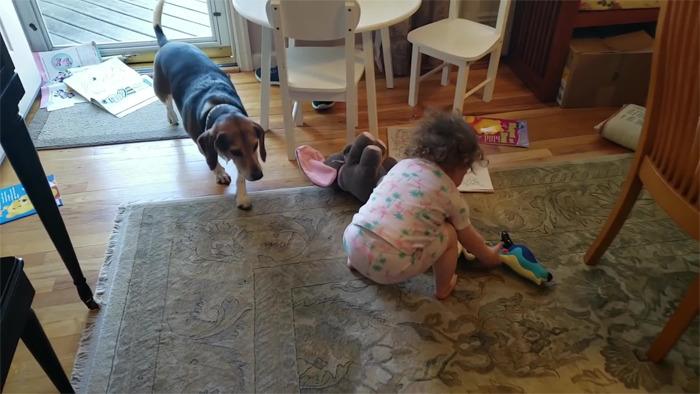 vídeo cachorro pianista e bebê 2