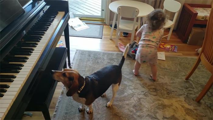 vídeo cachorro pianista e bebê 3