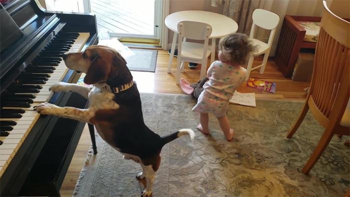 vídeo cachorro pianista e bebê 4