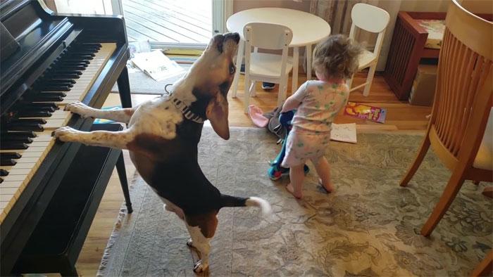 vídeo cachorro pianista e bebê 5