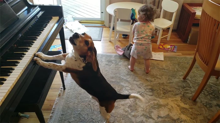 vídeo cachorro pianista e bebê 6