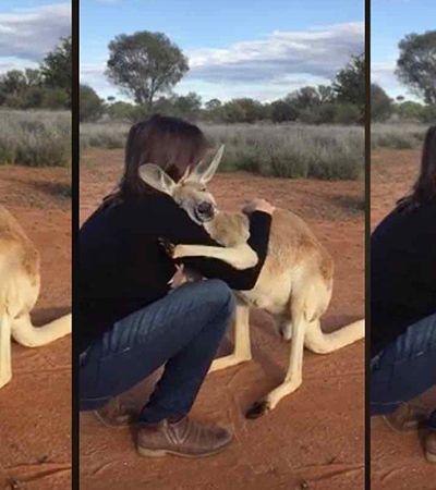 Este canguru não para de abraçar os voluntários que o resgataram após perder a mãe