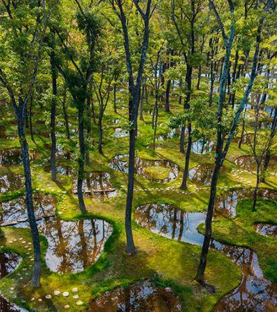 Os jardins de água da arquiteta Junya Ishigami parecem magia ou ilusão de ótica