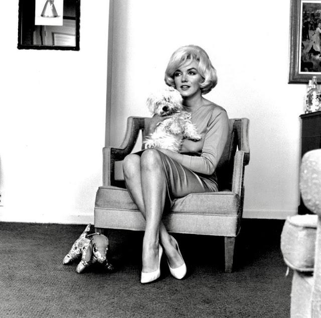 Marilyn Monroe e cachorro 3