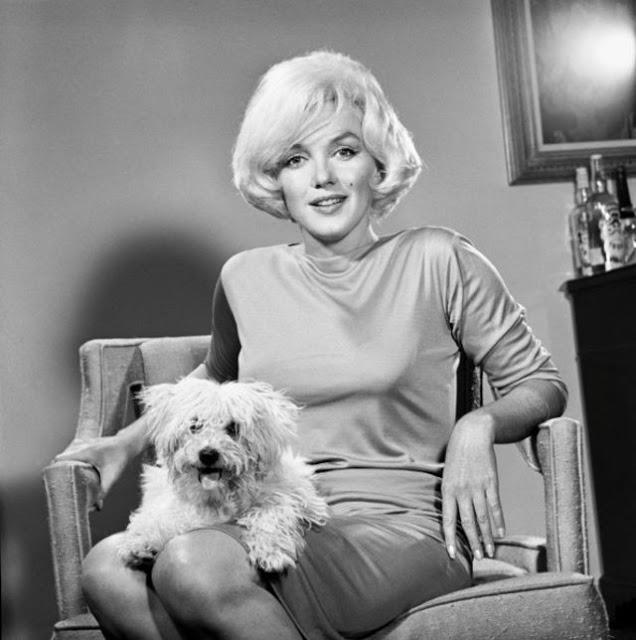 Marilyn Monroe e cachorro 4