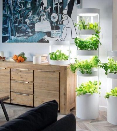 Jardim automático permite que você cultive até 76 plantas dentro de casa