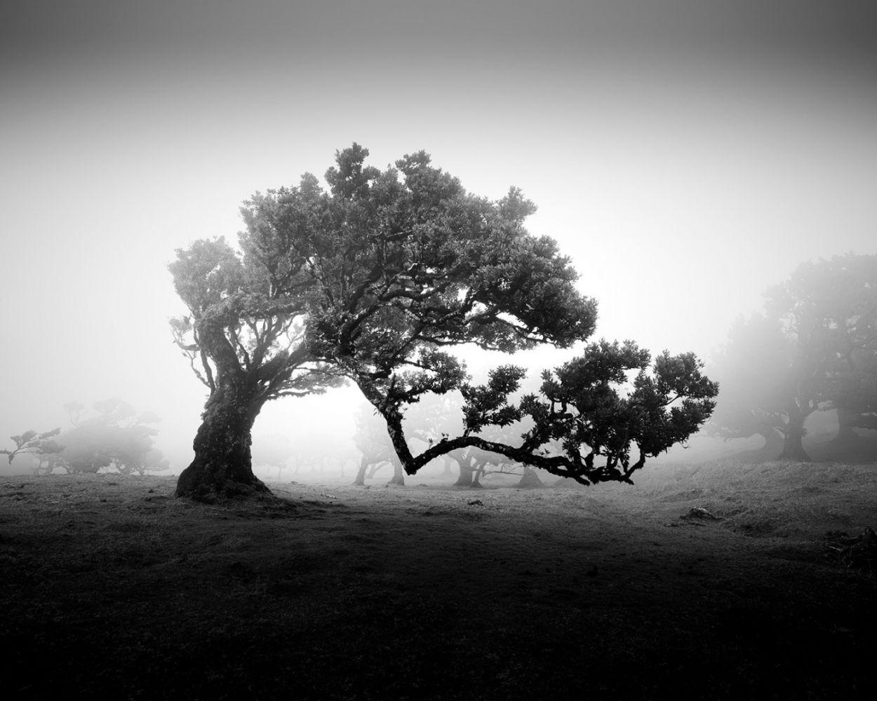árvores em preto e branco 1