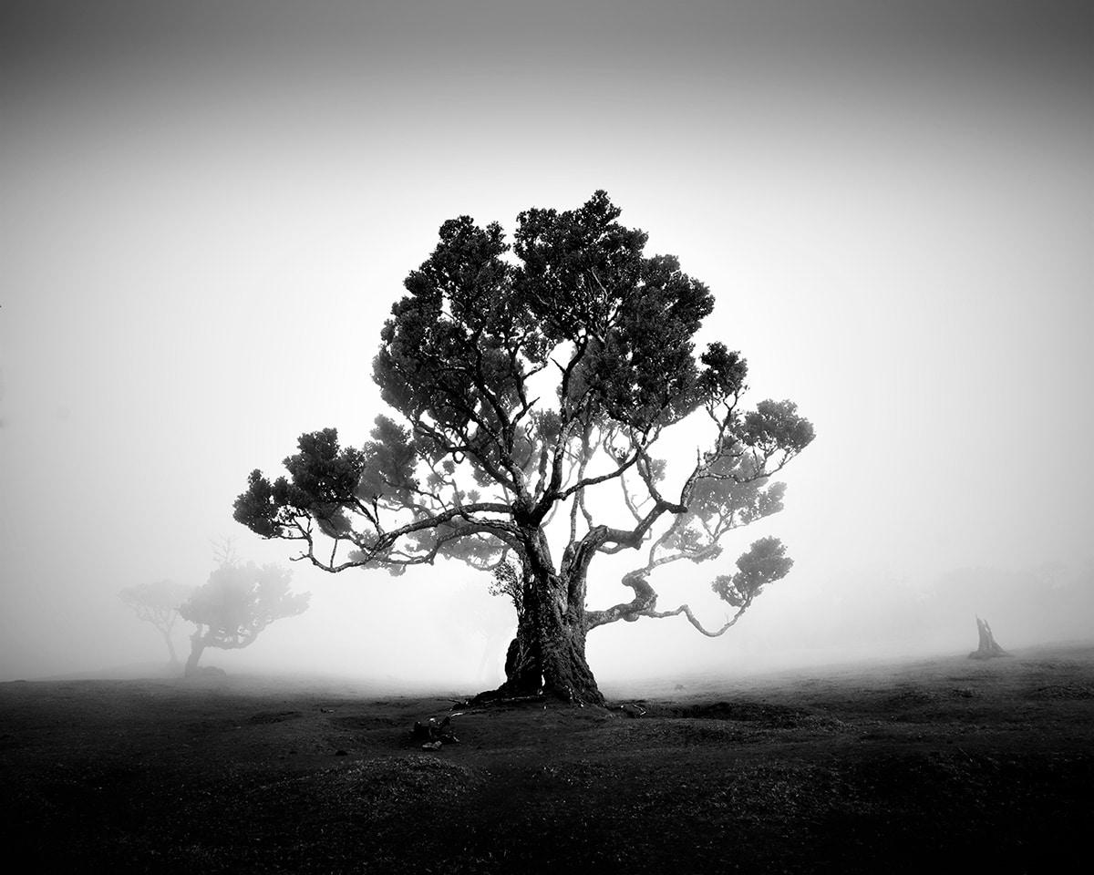 árvores em preto e branco 2