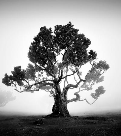 Fotos em preto e branco capturam o misterioso encanto das árvores antigas