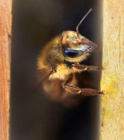Ele mora no 13º andar e mesmo assim teve apartamento tomado por enxame de abelhas