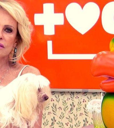 Ana Maria Braga chora ao falar de cachorrinha que ficou cega