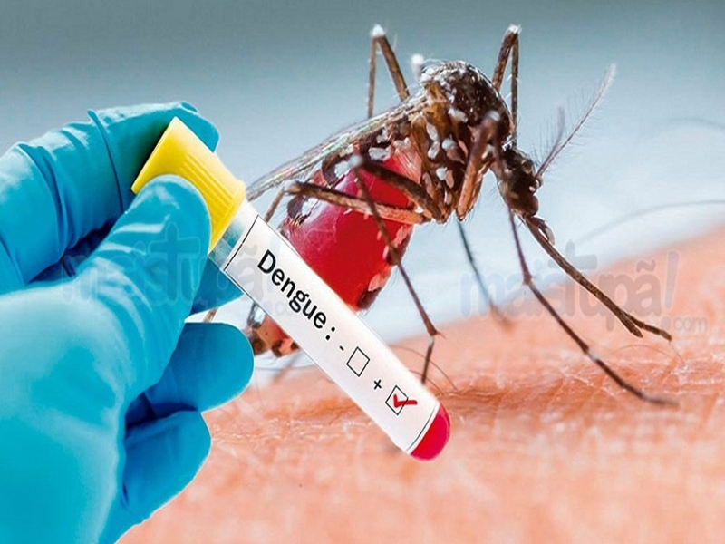 armadilha mosquito dengue 2
