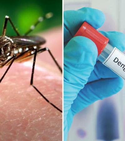 Biólogo brasileiro cria armadilha inovadora contra mosquito da dengue