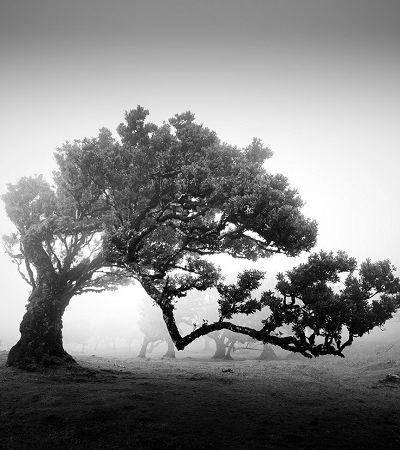 A imponência das árvores centenárias registrada pelas lentes de Michael Schlegel