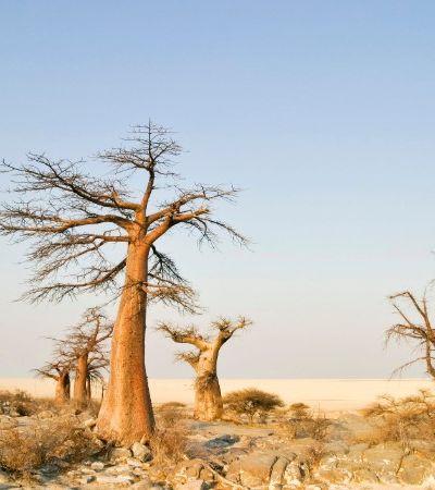 Lar ancestral de todos os seres humanos é finalmente descoberto por cientistas