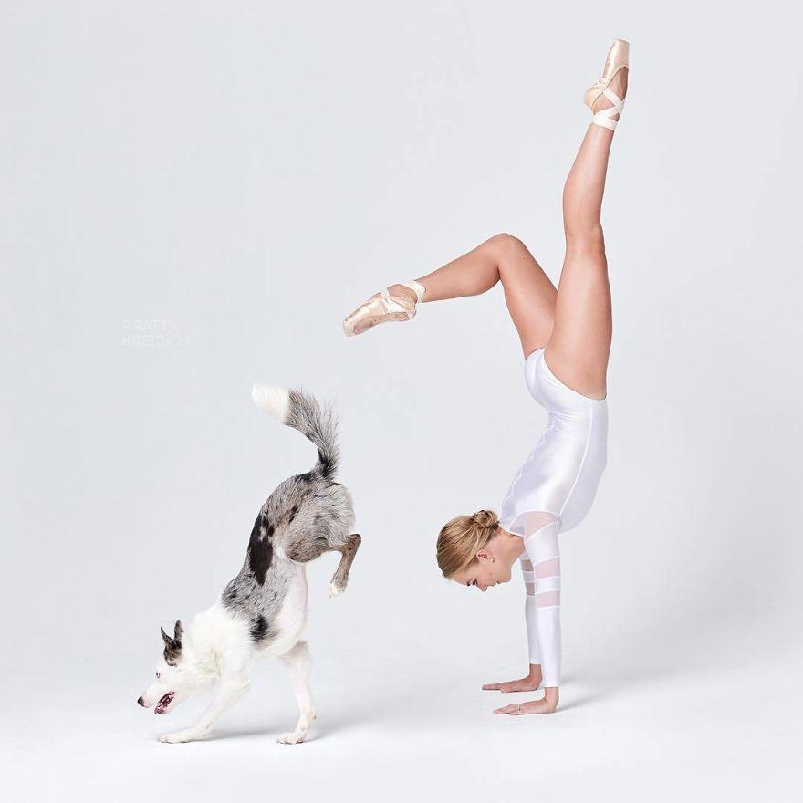 cães e dançarinos de balé 1