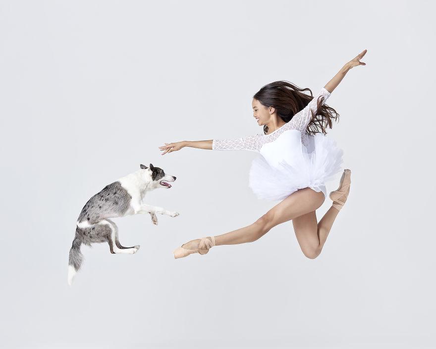 cães e dançarinos de balé 2