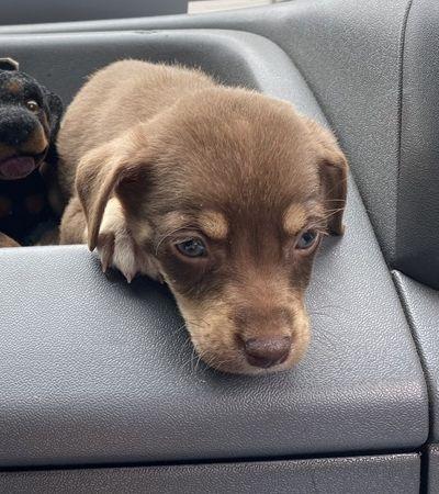 Cãozinho devolvido por chorar demais gera comoção e consegue novo lar