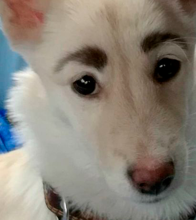 Com as sobrancelhas mais fofas do mundo, cachorrinha é batizada de Frida Kahlo