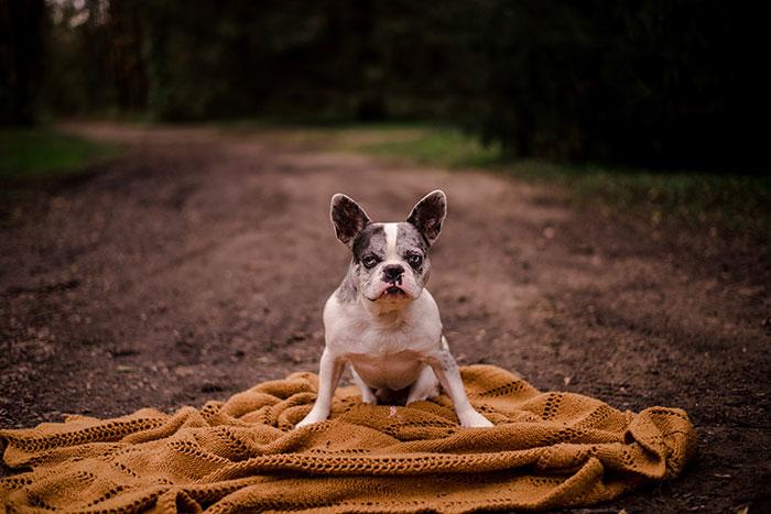 calendário hilário pais e cachorros 11