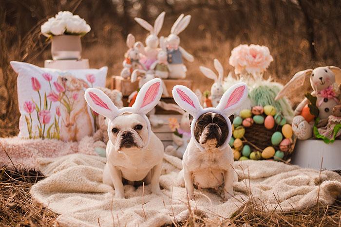 calendário hilário pais e cachorros 4