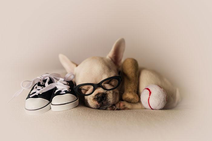 calendário hilário pais e cachorros 6